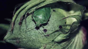 Insect Sprays Declining