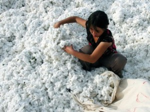 China Cotton
