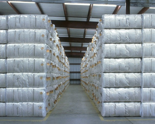 Trucking Issues Limiting Timely Cotton Movement