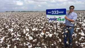 Kyle Fadal, Dow AgroSciences seed sales representative, has seen great results in the Newellton, La., area with the newly introduced PhytoGen® brand variety PHY 333 WRF.
