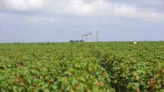 PhytoGen trials