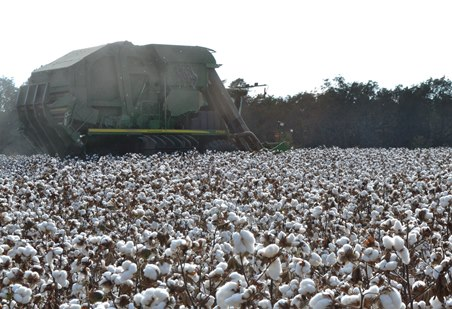 Cotton Highlights from December WASDE Report