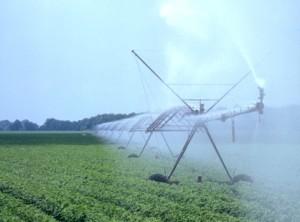 Cotton Irrigation June Web