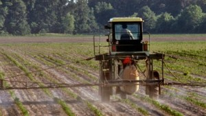How to Reduce Cotton Burn from Post Herbicide Applications