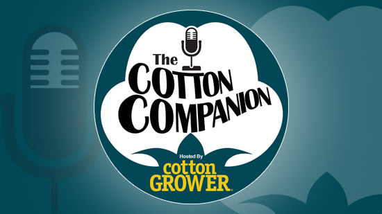 Episode 34 – Forces Shaping the Cotton Market at Harvest Time