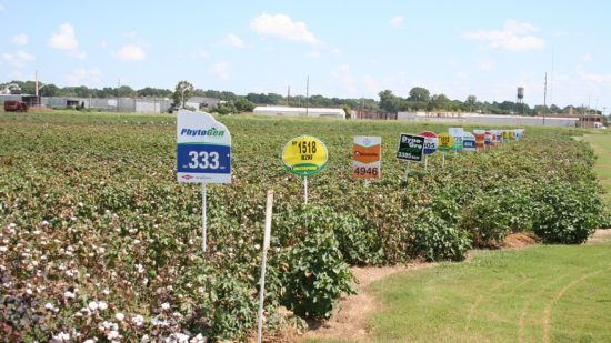 Deltapine Holds Top Spot in 2016 Planted Varieties