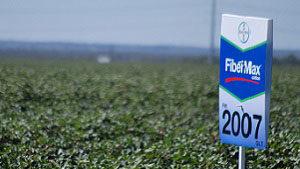 Maximizer Club Honors Top FiberMax Dryland Growers