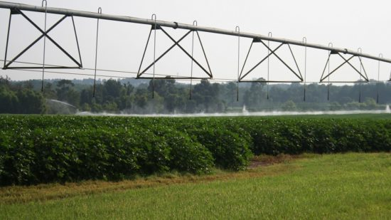 "Shurley: ""The 2019 State of Cotton"" at the Farm Level"