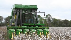 Crop Progress Notes for U.S. Cotton – October 15