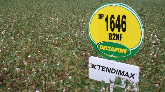 Deltapine Captures Largest Acreage Footprint in U.S. in 2017