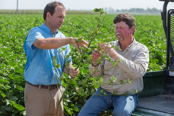 Cotton Farmers See Benefits of the Enlist Weed Control System