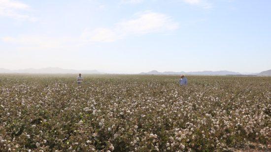 P.I.E. Tour Takes Southeast Cotton Producers to San Joaquin Valley