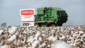 Time to Pick Your 2018 Cotton Varieties