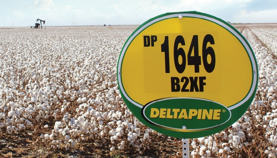 Deltapine Again Tops Cotton Varieties Planted in 2019