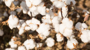 A Look at Changes in Cotton and Textile Engineering Education