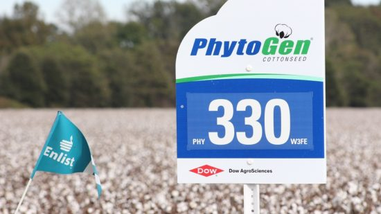 PhytoGen Tops Extension Trials Across the Cotton Belt