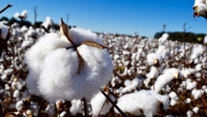 Trade Tensions Continue to Impact Cotton and Textiles