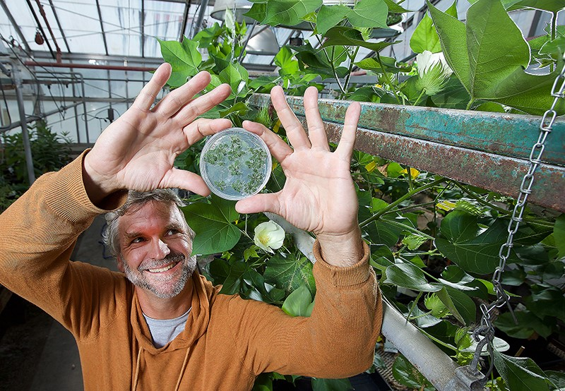 Purdue Study Maps Pathways for Improved Cotton Quality