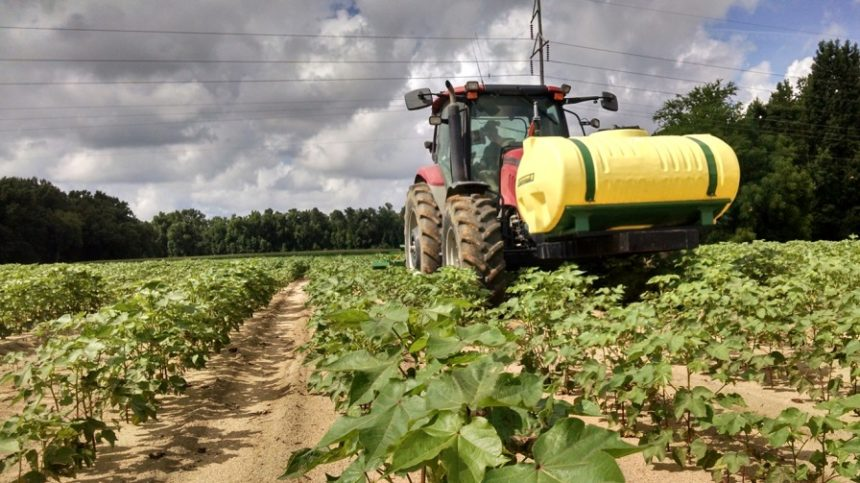 Clemson Researcher Studying In-Field Variability on Cotton Yields and Quality