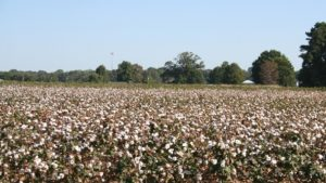 New Mid-South Defoliation Guide Available Online