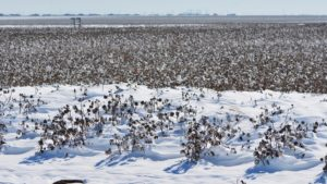 Wet Conditions Continue to Slow Texas Harvest, Reduce Quality
