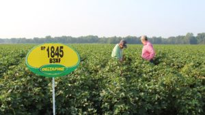 DP 1845 B3XF Is Newest Strong Performer in Deltapine Lineup
