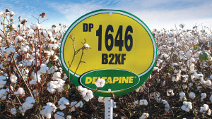 DP 1646 B2XF  Flexes Its Muscles Again in 2018