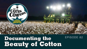 Documenting the Beauty of Cotton