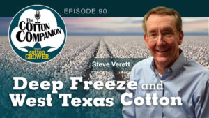 Deep Freeze and West Texas Cotton