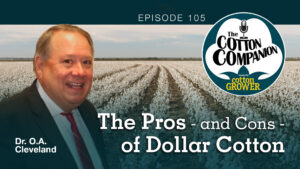 The Pros – and Cons – of Dollar Cotton